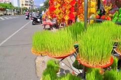 Los seedings afortunados del arroz están para la venta en la calle en el Año Nuevo lunar vietnamita tradicional Fotografía de archivo libre de regalías
