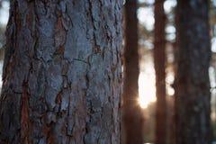 Los sistemas del sol detrás de los árboles Foto de archivo libre de regalías