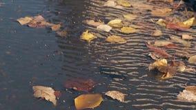 Los soplos del viento ligero y las hojas de oro caen en el agua de ondulación almacen de metraje de vídeo