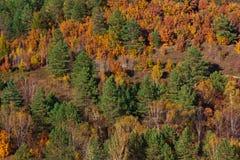 Los soportes de bosque como pared que llena totalmente el marco Borde Imágenes de archivo libres de regalías