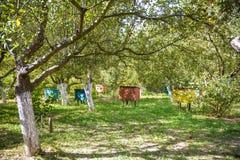 Los soportes de Pasika en el jardín de una casa para las abejas viven en las colmenas que polinizan las flores y recogen el polen Fotos de archivo libres de regalías
