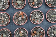 Los Succulents que pueden servir como fondos se tiran en el invernadero Fotos de archivo