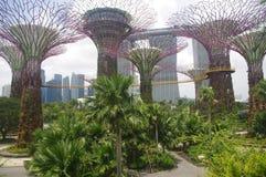 Los supertrees de Singapur Fotografía de archivo libre de regalías