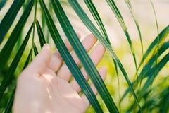 Los tactos de la mano de la mujer y gozan de la hoja de palma verde encendida por el sol fotos de archivo libres de regalías