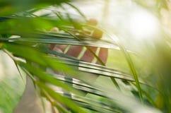 Los tactos de la mano de la mujer y gozan de las hojas de palma verdes encendidas por el sol foto de archivo libre de regalías