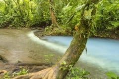 Los Teñideros und gerundeter Baum Stockfotografie
