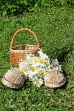 Los temas, verano, flora, naturaleza, día de fiesta, flores, campo, margaritas, blanco, zapatilla de deporte, cesta, hierba, verd Imágenes de archivo libres de regalías