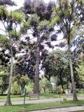 Los tentáculos del árbol Fotografía de archivo libre de regalías
