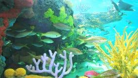 Los tiburones grandes y los pescados tropicales coloridos nadan en un arrecife de coral metrajes