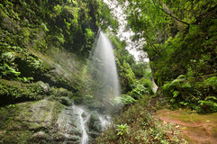 Los Tilos waterfall and Laurisilva forest in La Palma, Canary Islands, Spain.  stock photos