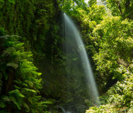 Los Tilos waterfall Laurisilva in La Palma laurel forest. At Canary Islands stock image