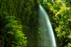 Los Tilos waterfall Laurisilva in La Palma laurel forest. At Canary Islands stock images