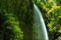 Los Tilos瀑布Laurisilva在拉帕尔马岛月桂树森林里 库存图片
