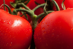 Los tomates imagen de archivo libre de regalías