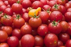 Los tomates de cereza orgánicos en el mercado escogieron recientemente del jardín Fotografía de archivo
