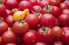 Los tomates de cereza orgánicos en el mercado escogieron recientemente del jardín Foto de archivo