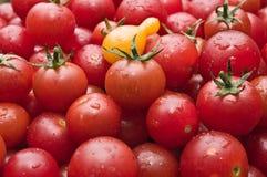 Los tomates de cereza orgánicos en el mercado escogieron recientemente del jardín Fotos de archivo