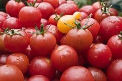Los tomates de cereza orgánicos en el mercado escogieron recientemente del jardín Imagen de archivo libre de regalías