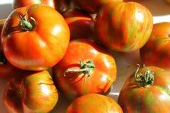 Los tomates de cosecha propia de la cebra del verde de la herencia se cierran para arriba fotografía de archivo