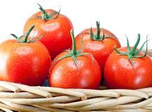 Los tomates madurados en agua caen en una cesta wattled. Aún-vida en un fondo blanco Foto de archivo