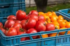 Los tomates maduros rojos venden en el mercado de los granjeros en día del otoño en las cajas plásticas azules con otras verduras Fotografía de archivo
