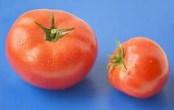 Los tomates rojos con agua caen en un fondo brillante azul Foto de archivo libre de regalías