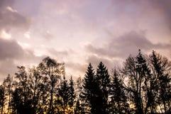 Los tonos calientes de la primavera de los abedules del árbol forestal del amanecer siluetean el cielo de los árboles Imagen de archivo libre de regalías