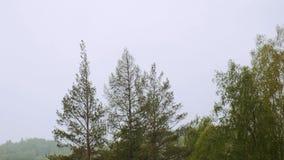 Los tops de los árboles en las montañas La nieve está cayendo Mún tiempo metrajes
