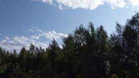 Los tops de árboles son florecientes y que agitan en el viento metrajes