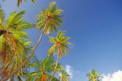 Los tops de palmeras Fotos de archivo libres de regalías