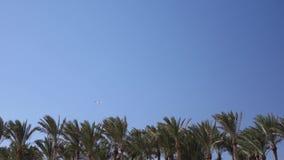 Los tops de palmeras agitan del viento en el avión del vuelo del cielo almacen de metraje de vídeo