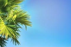 Los tops de palmeras en un cielo azul claro Foto de archivo libre de regalías