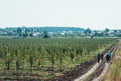Los trabajadores cansados están en un camino de tierra camino de su casa del manzanar imagen de archivo libre de regalías
