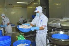 Los trabajadores están pesando los prendederos de pescados del pangasius en una planta de tratamiento en Tien Giang, una provinci Fotografía de archivo libre de regalías