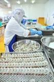 Los trabajadores están cambiando el camarón pelado sobre una bandeja para poner en la máquina congelada en una fábrica de los mar Foto de archivo libre de regalías