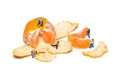 Los trabajadores miniatura quitan los mandarines de la cáscara Trabajo en equipo Mandarinas aisladas Fotos de archivo
