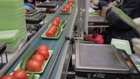 Los trabajadores presentan los envases verdes plásticos en la cadena de producción automática metrajes