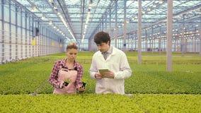 Los trabajadores químicos descubren la situación con la seguridad de los productos vegetales Escoja para arriba los potes con la  almacen de metraje de vídeo