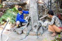 Los trabajadores son cemento de la lechada en el tronco de árbol falso fotografía de archivo