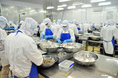 Los trabajadores son de peladura y de proceso de camarones crudos frescos en una fábrica de los mariscos en el delta del Mekong d Fotografía de archivo