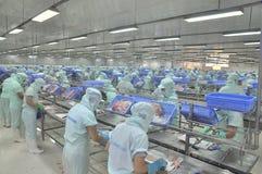 Los trabajadores son el cortar del siluro del pangasius en una planta de tratamiento en An Giang, una provincia de los mariscos e Imágenes de archivo libres de regalías