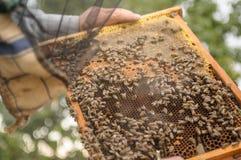 Los trabajos de mano del ` s del apicultor con las abejas y las abejas en el colmenar y en la naturaleza Marcos con la miel de un Fotos de archivo