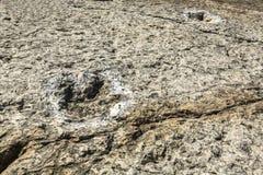 Los trackways del fósil de dinosaurio en el cabo Espichel oscilan el acantilado, Sesimbra, fotos de archivo