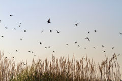 Los tragos vuelan sobre la caña Fotos de archivo