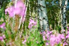 Los troncos de árbol Imagen de archivo libre de regalías