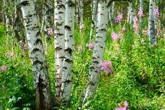 Los troncos de árbol hermosos Imágenes de archivo libres de regalías