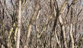 Los troncos de las base de conocimiento jovenes de los árboles de las hojas Fotos de archivo