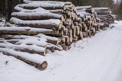 Los troncos del corte de árboles mienten debajo de nieve registración del invierno Leña Fotos de archivo