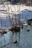 Los troncos del río recubren con caña en el fondo del banco nevoso iluminado por la luz del sol del invierno foto de archivo libre de regalías