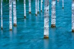 Los troncos desecados de los árboles sumergidos de la picea de Schrenk's que suben sobre los water's emergen de la parte infe Fotos de archivo libres de regalías